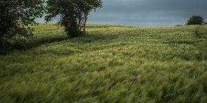 greenfield land